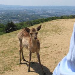 ふらり奈良の旅